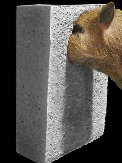 einbetoniertes Schwein von Paul Sieben